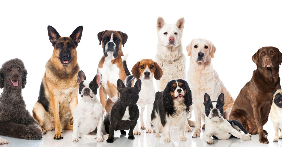 Hunde aus Serien