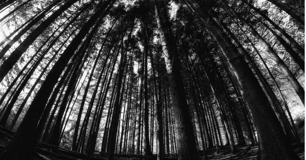 Blair Witch Wald Dunkel