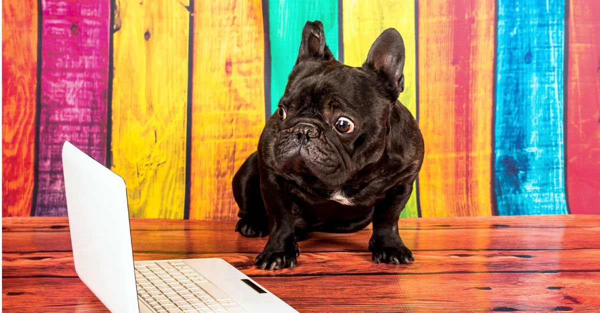 frenchbulldog-laptop