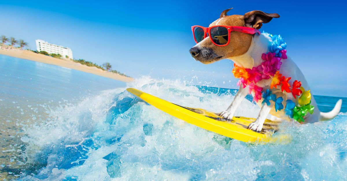 hund-surfboard