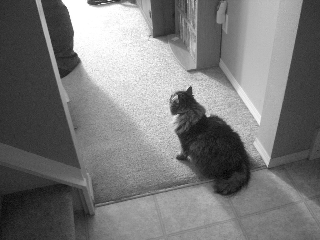 Rubble älteste Katze der Welt