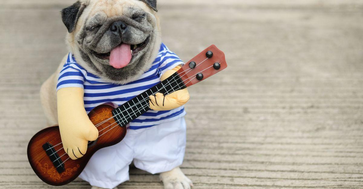 hund-gitarre