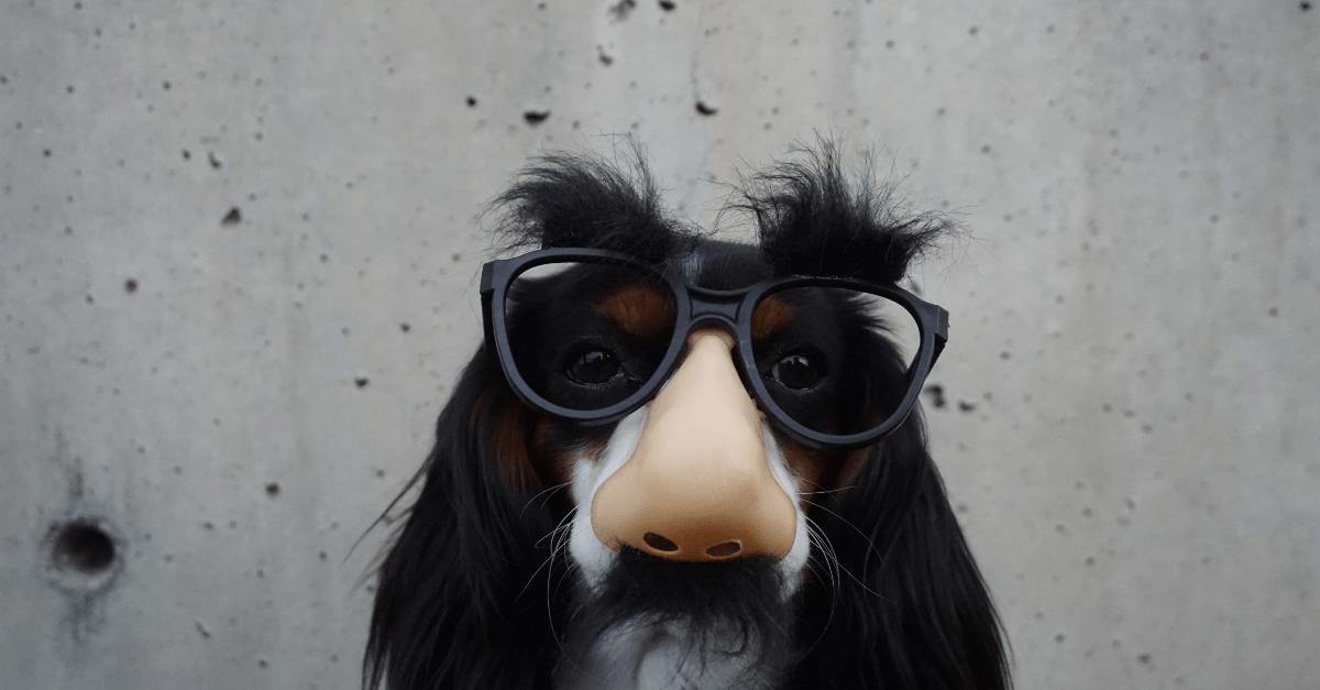 animal-glasses
