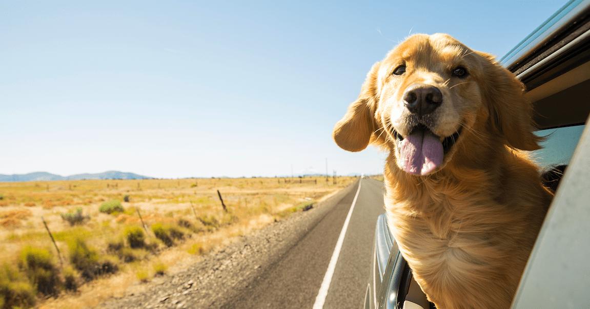 Comet Hund Full House