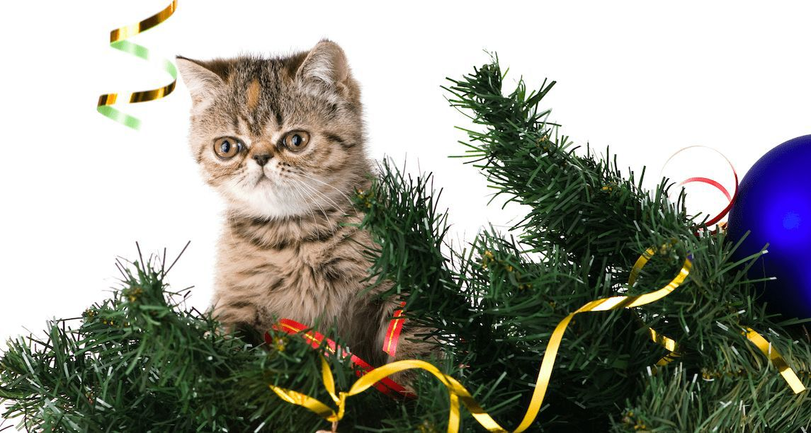 Kreative Weihnachtsbaum-Spitzen