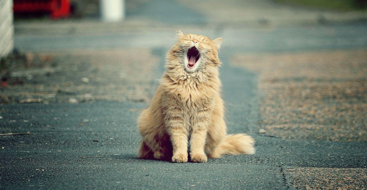 Lieblingscharaktere als Katzen