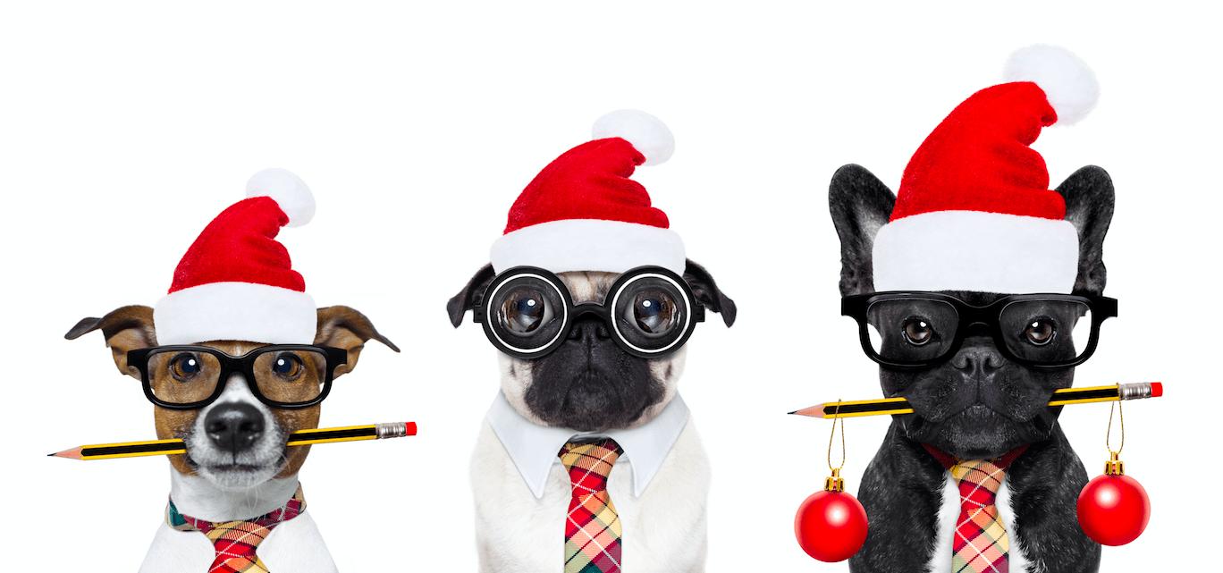 Tierfotos Weihnachten