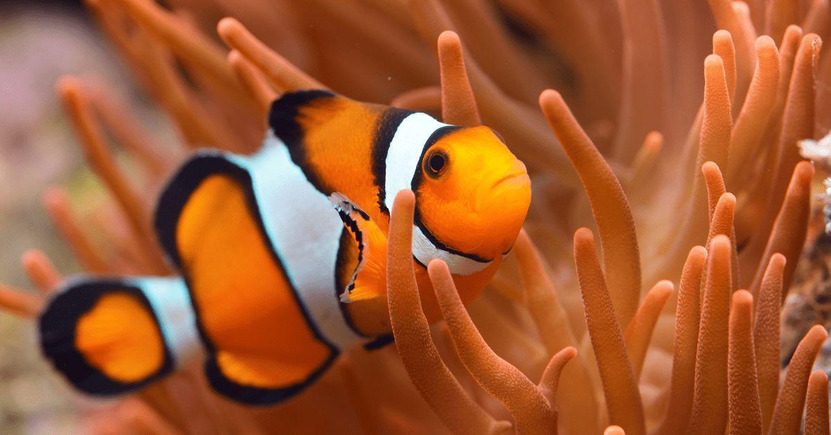 Findet Nemo, Clownfisch, Quiz, Disney