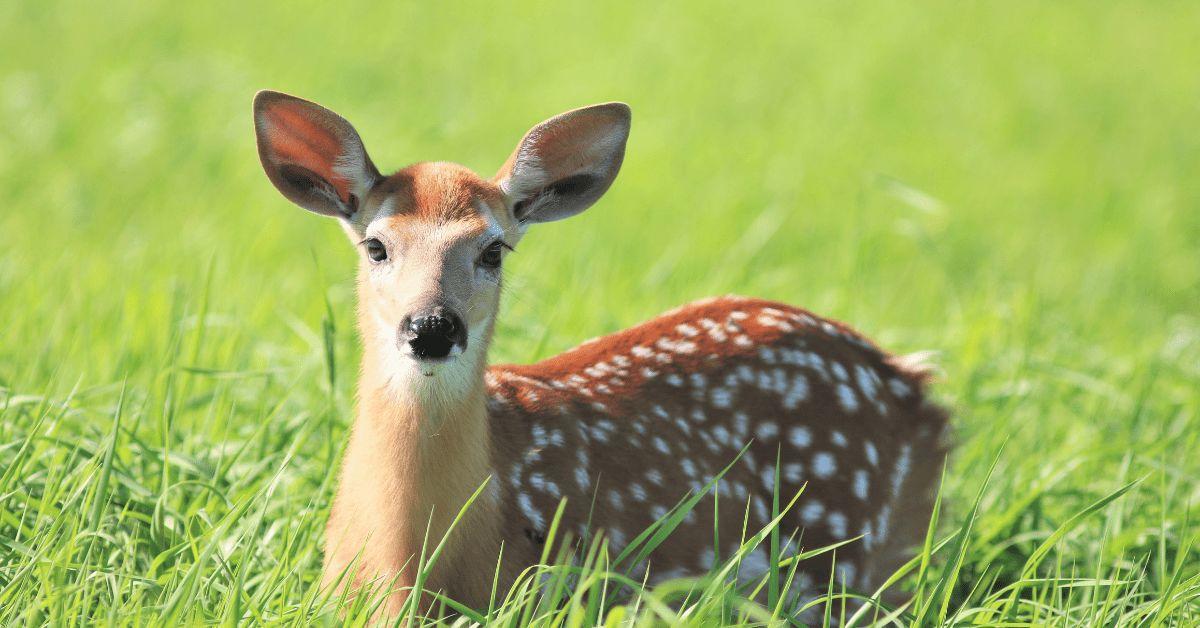 Bambi Disney Film Jäger Wildnis Absurd