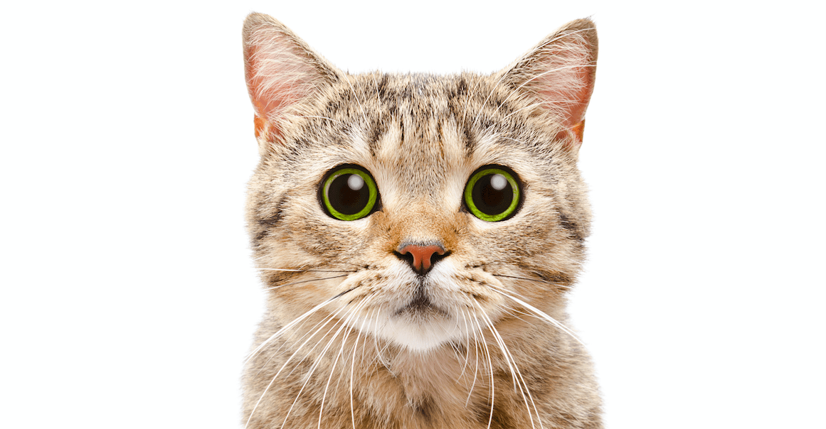 Katzen als Schauspieler