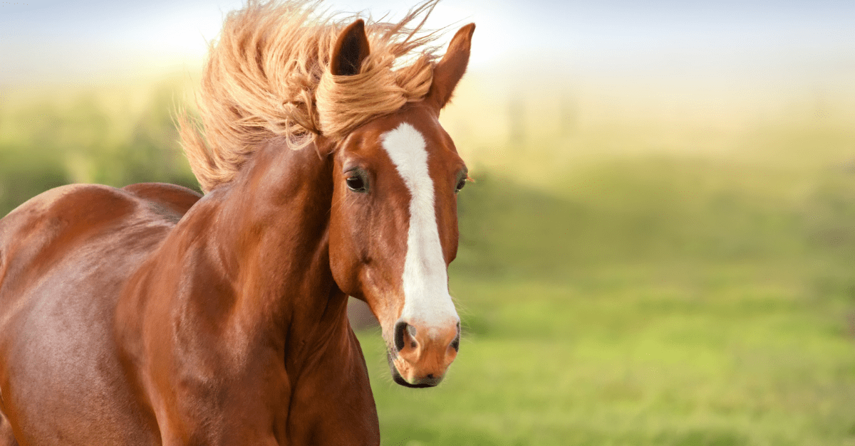 Pferd (1)