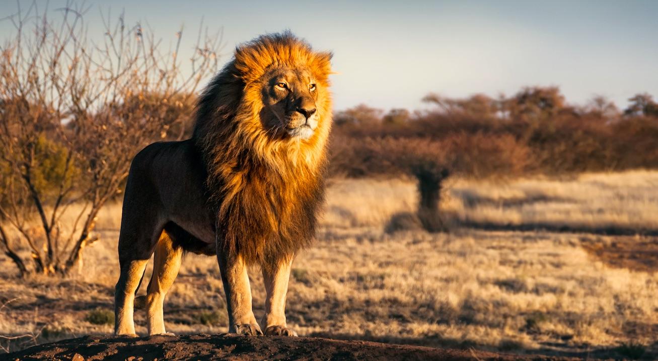 """So realistisch sind die Tiere in """"König der Löwen""""-Remake!"""